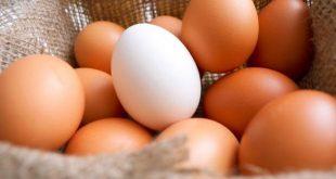 yumurta büyüsü